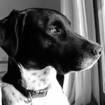 Homer the Dog